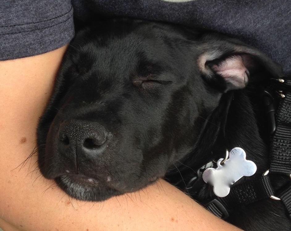 All Dog Rescue - Minneapolis, MN